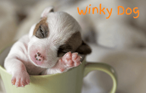 Winky Dog in Teacup