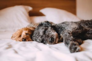 Two Relaxed Dogs sleeping