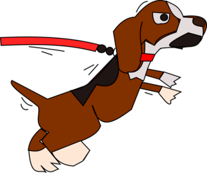 Stop Your Dog pulling on a leash